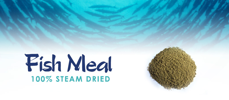 FIsh-Meal